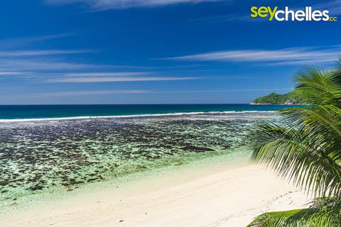 Allamanda Seychelles beach