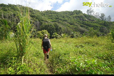 grassland behind petite anse - on your way to anse cocos