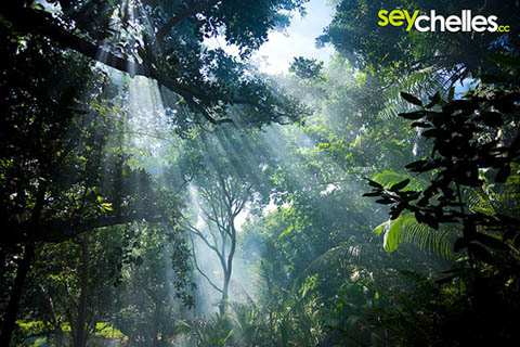 smoke in the tropical forests of la digue