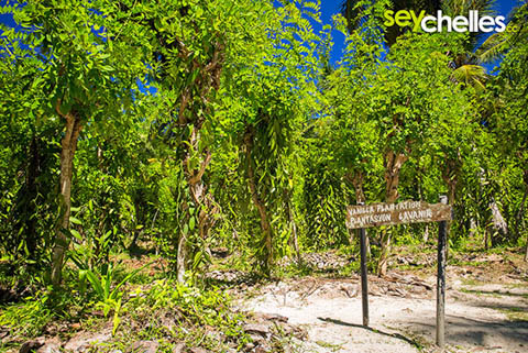 union estate vanilla plantation on la digue