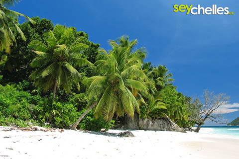 ile therese - beach with palmtrees