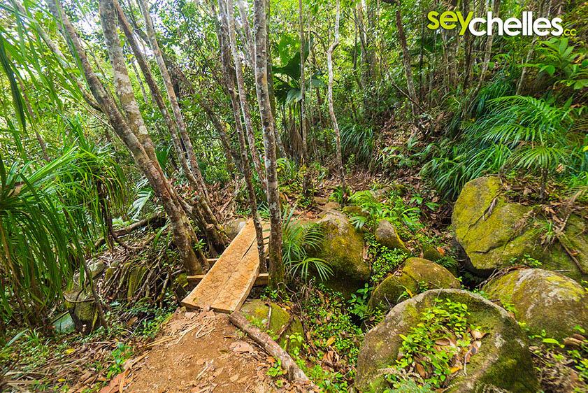 beatiful hike - mount copolia mahe