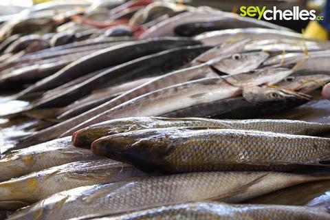 frische fische auf dem markt in victoria