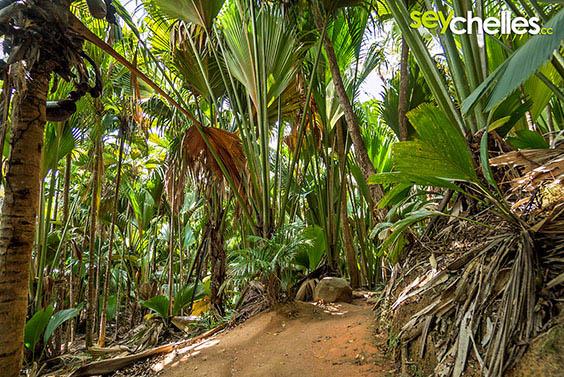 path through the vallee de mai