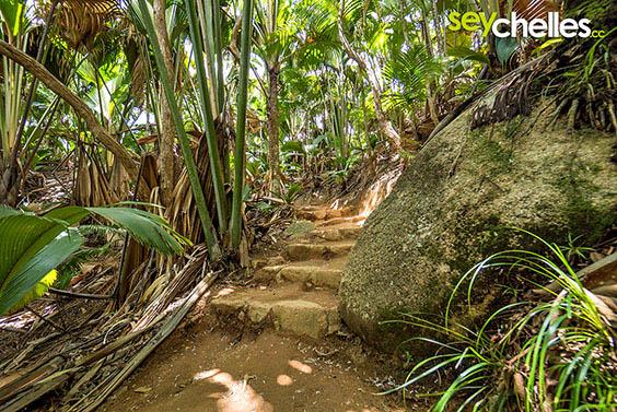 path - vallee de mai