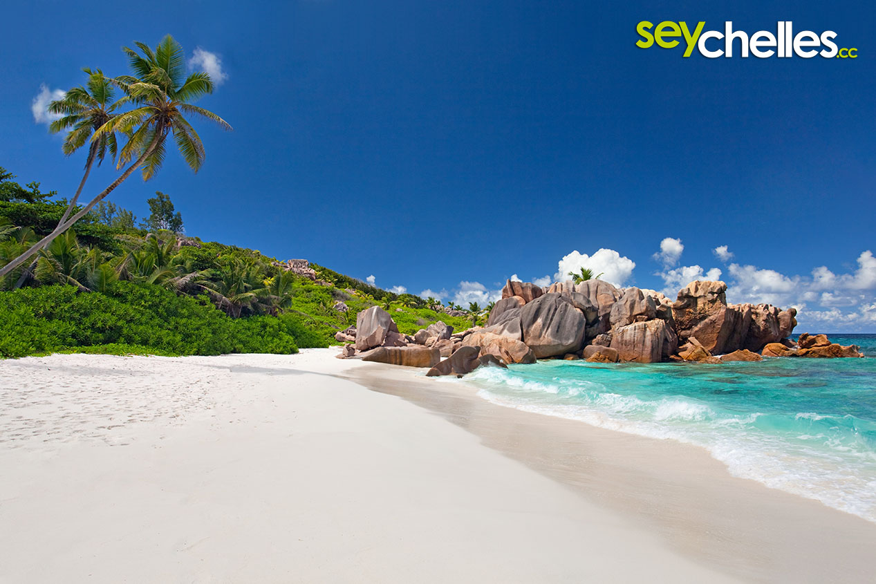 The Area Behind Anse Cocos Gave Beach Its Name It Is A Former Coconut Plantation And Ruins Are Still Visible In Swamp