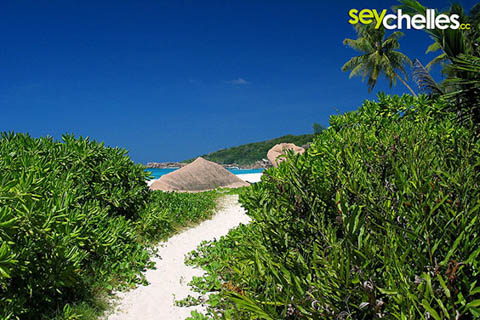 path to petite anse in grand anse