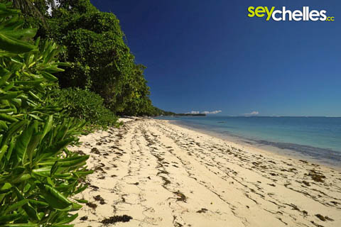 anse aux pins narrow beach near seychelles international airport on mahe
